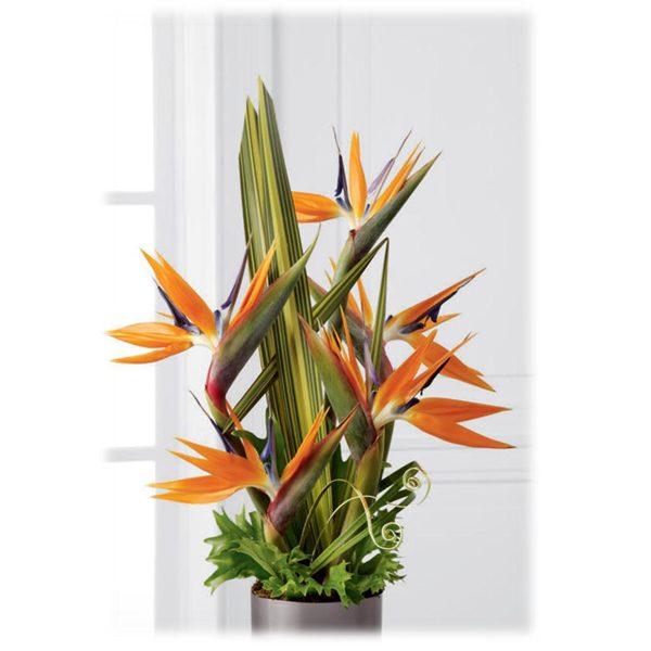 Arrebol - Arreglo de flores - Arreglo Floral tropical . Ave del Paraíso